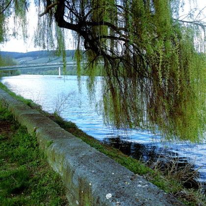 Immer noch Margetshöchheim, Mainufer