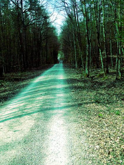 Und immer noch Wald