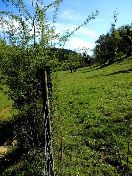 Erst mal an sattgrünen Weiden vorüber