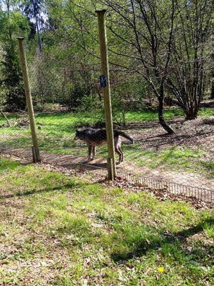 Der Wolfspark