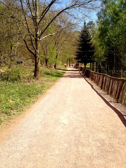 Weg durch den Wolfspark