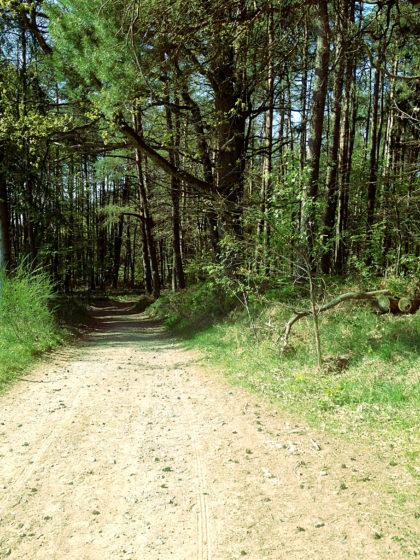 ...wieder in den Wald hinein