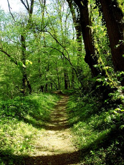 Frühlingswald vom Feinsten