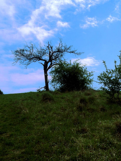 """""""Mein Freund, der Baum"""""""