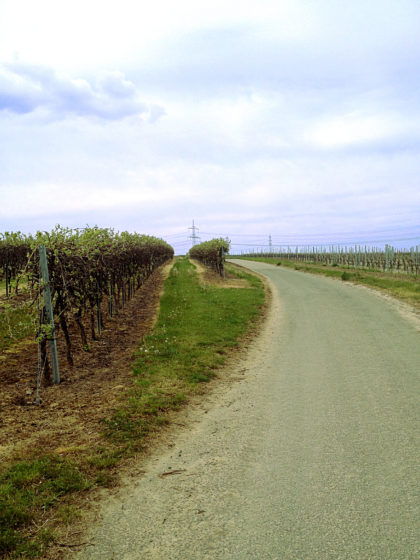 """In den Wein""""bergen"""""""