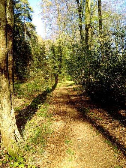 Immer noch Wald...