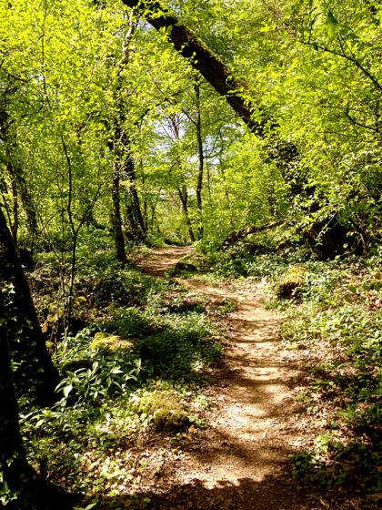 Ein Wald wie mit feinstem Pinselstrich gemalt