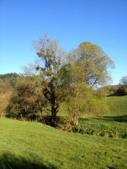 ...mit Blick auf Wiesen und Bäume und den aquamarinblauen Himmel