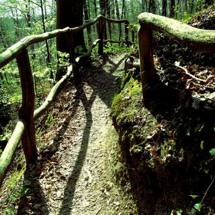 Wieder hinein in den Wald...