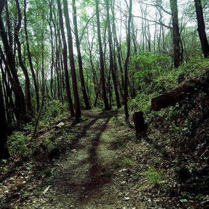 Ein Frühlinsgwald, wie er im Buche steht