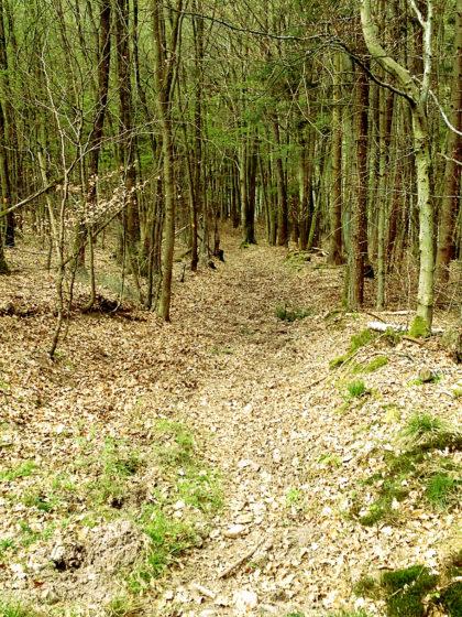 7 Kilometer vor Rieneck