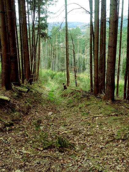 Der Abstieg nach Rieneck