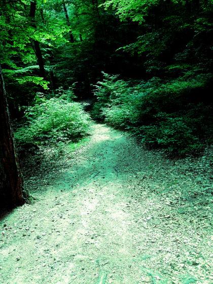Mal durch etwas dunkleren Wald