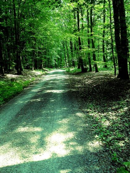 Und noch ein bisschen Wald zum Abschluss