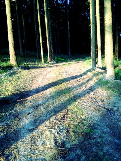 Ich biege in den Wald ab