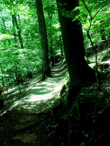 ...durch schattendunklen Wald