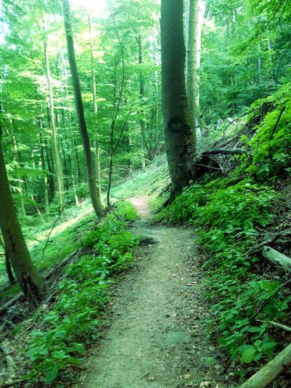 Ich habe den Richard-Löwenherz-Weg verlassen und befinde mich auf irgendeinem spontan eingeschlagenen Verbindungsweg zur Burg Trifels