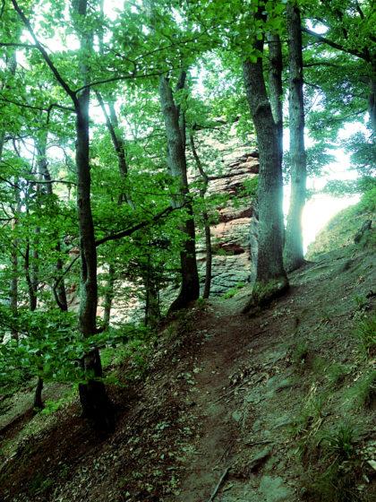 Ganz plötzlich ein Felsen zwischen den Bäumen