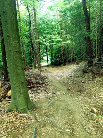 Wunderbar stiller Wald