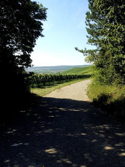 In den Weinbergen zwischen Würzburg und Randersacker