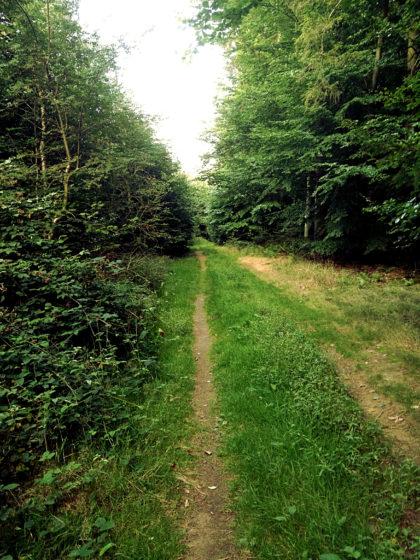 Der schweigende Wald