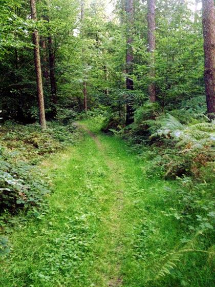 Noch einmal dichter Wald