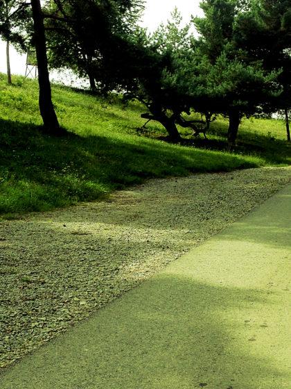 Ein Gehen wie in einer Chlorophyllgalaxie