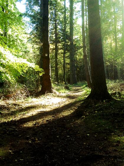 Was für ein fantastischer Lichtwald!