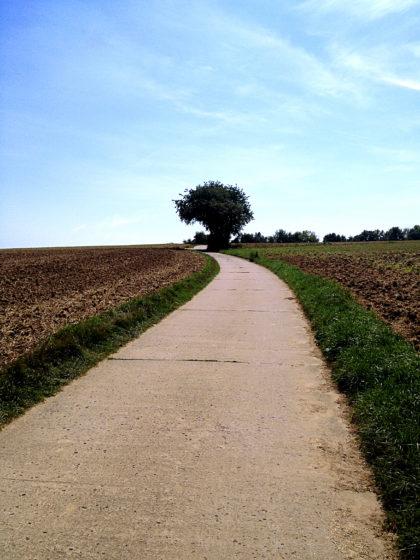 Richtung Weinberge