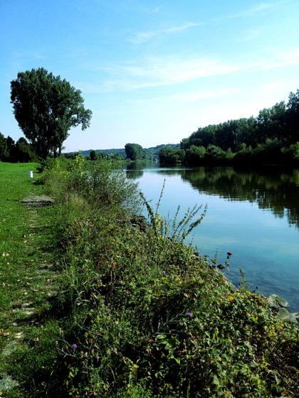 Mainufer bei Sommerhausen