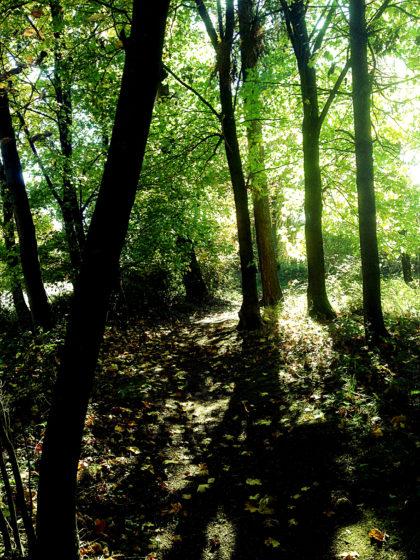 Ein kurzes Waldstück...