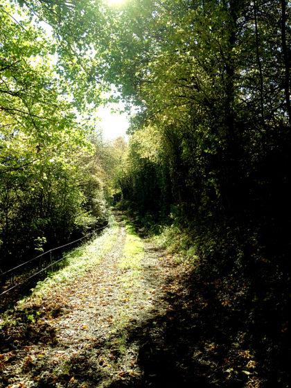 Und wieder Wald