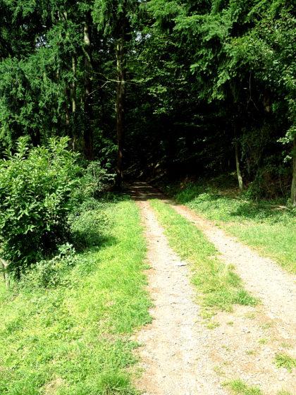 Der Wanderpfad ist insgesamt 14 Kilometer lang; natürlich gibt es viele Waldpassagen