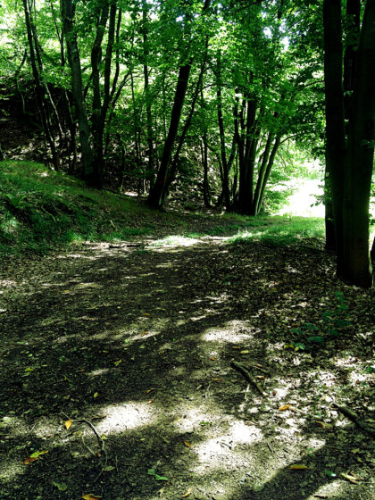 Immer noch Wald