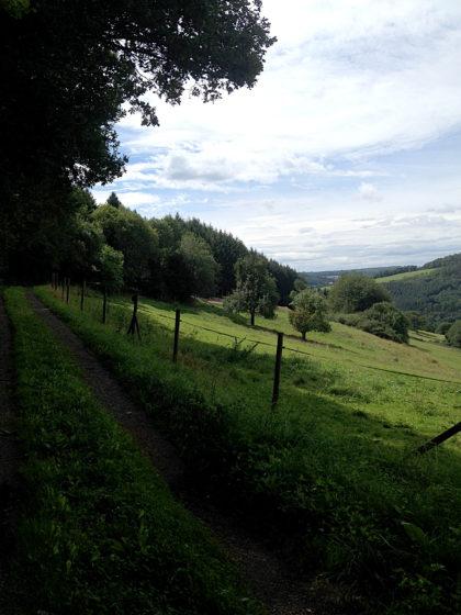 Jetzt Wiesen und Weiden, dazu kann der Blick auch über zahlreiche bewaldete Hügelkuppen schweifen