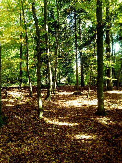 Herbstleuchten, nächster Grad