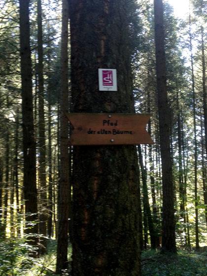 """Pfad der alten Bäume, eine von mehreren """"Themenpassagen"""""""