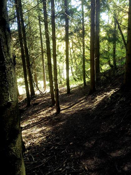 """""""Statt der tönenden Worte des Waldes Schweigen"""""""