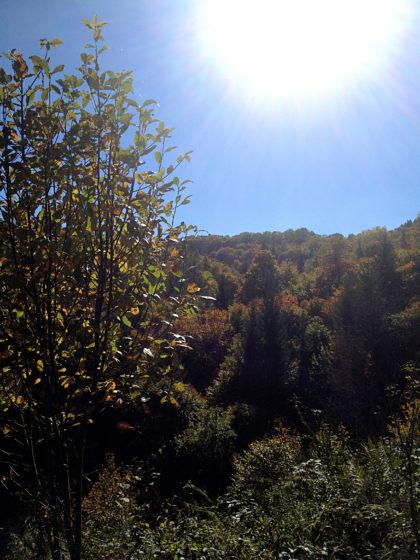 Herbstwaldpanorama vom Feinsten