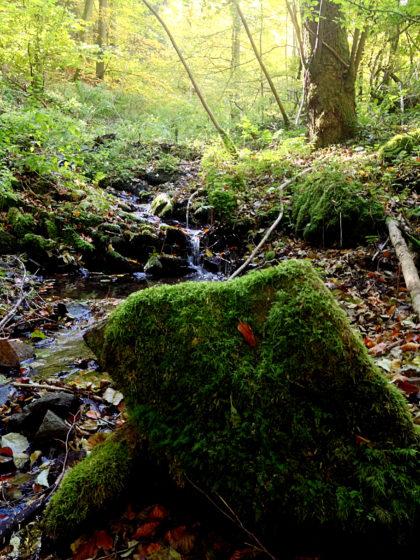 An einem Bachlauf voller bemooster Steine entlang...