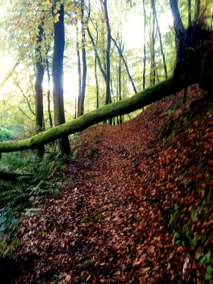 ...auch mal unter einem Baumstamm hindurch...