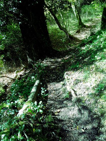 Auch mal ein wenig Schattenwald