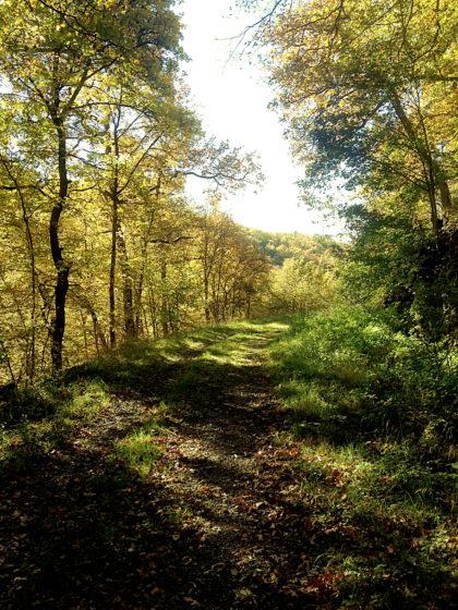 Gehen + Wald + Licht + Farben = Wohlgefühl
