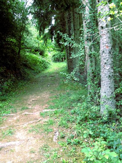 Der Wald sieht an manchen Stellen ein bisschen so aus, als ob hier noch der Schinderhannes sein Unwesen treiben würde