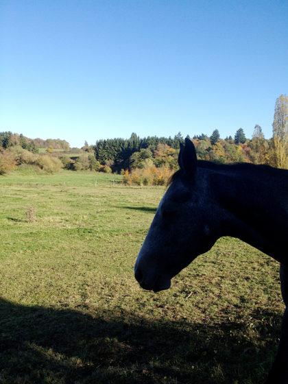 An Pferdekoppeln vorüber