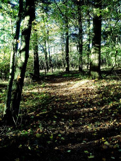 ,,,noch einmal Wald