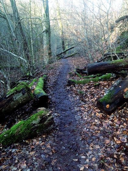 Schlamm und umgestürzte Bäume gibt es an vielen Stellen des Pfades
