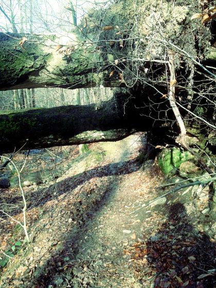 Und wieder mal unter einem umgestürzten Baum hindurch