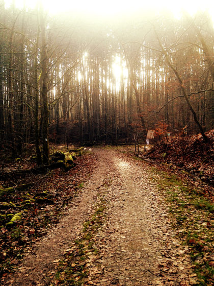 Über einen breiten Waldweg...