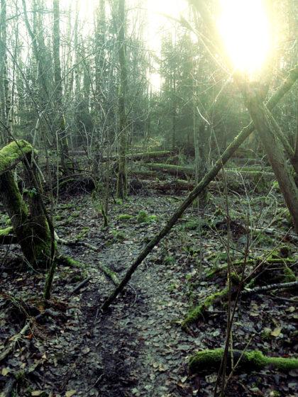 Die Abzweigung zur Forstscheune ist verpasst und ich befinde mich auf dem Weg zurück zum Netzbachweiher